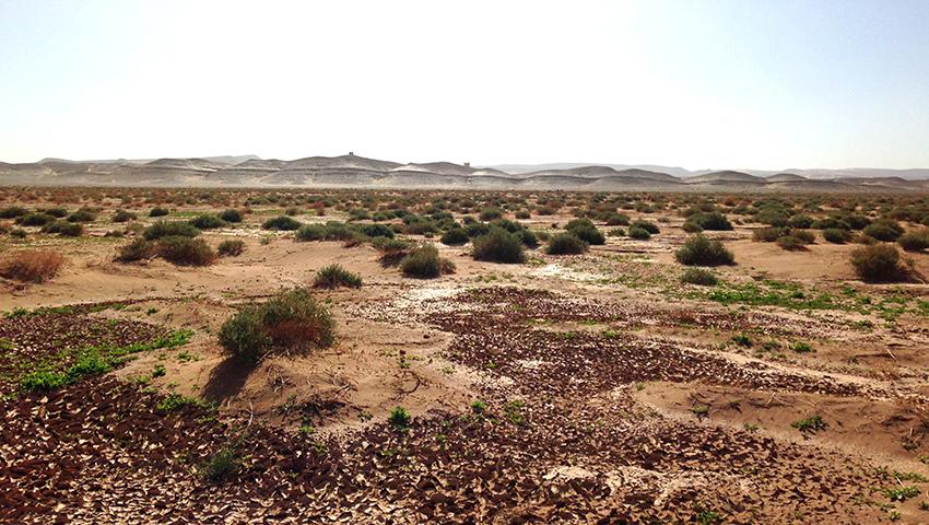 voyage dans le désert