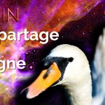 Rituel – Le partage du cygne