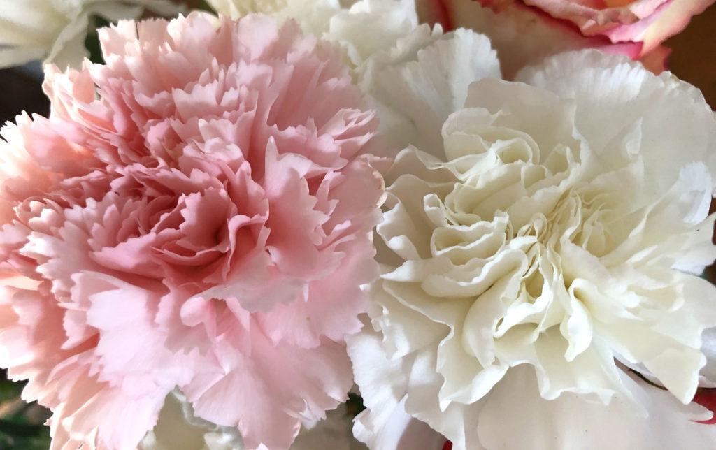Deux fleurs d'amour se rencontrent sans honte